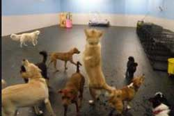 pet daycare in raleigh