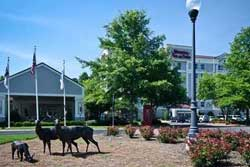 pet friendly hotel in raleigh-durham
