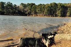 pet friendly dog parks in raleigh